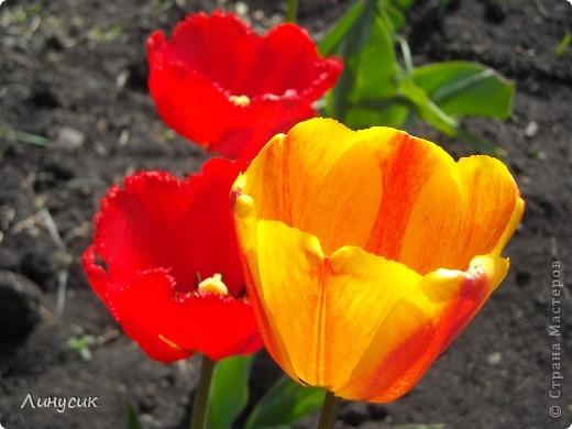 Чудесные розы фото 17