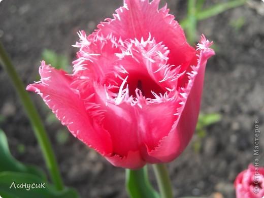 Чудесные розы фото 39