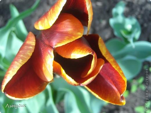 Чудесные розы фото 38