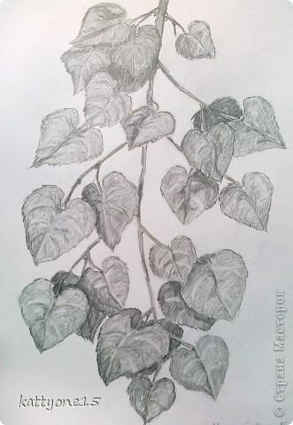 рисунки карандашом листья: