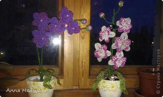 Орхидея. фото 4