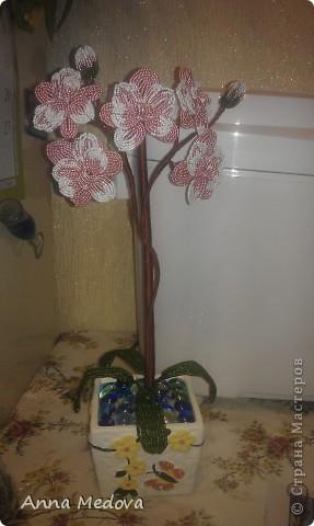 Орхидея. фото 6