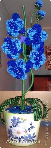 Орхидея. фото 1