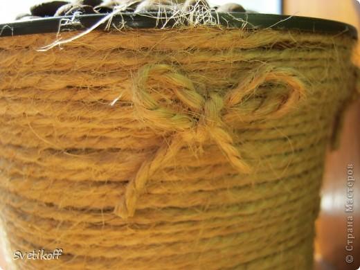 """Выросло и у меня первое кофейное чудо-деревце. Только с маленькими """"грешками"""", но для первого раза думаю нормально :-) фото 3"""