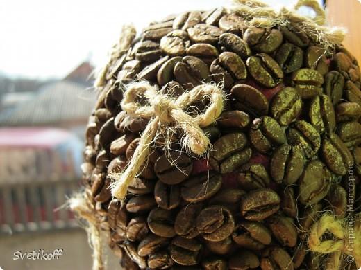 """Выросло и у меня первое кофейное чудо-деревце. Только с маленькими """"грешками"""", но для первого раза думаю нормально :-) фото 2"""