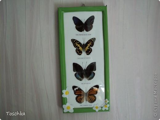 Вот так приукрасила чёрную рамку с бабочками. Обклеила её пленкой зелёной по периметру. Она сразу стала веселее. фото 1