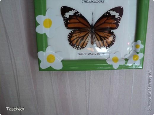 Вот так приукрасила чёрную рамку с бабочками. Обклеила её пленкой зелёной по периметру. Она сразу стала веселее. фото 3
