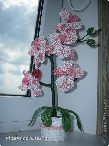 Орхидею плела в прошлом году, сейчас сделала для неё новый горшочек фото 1