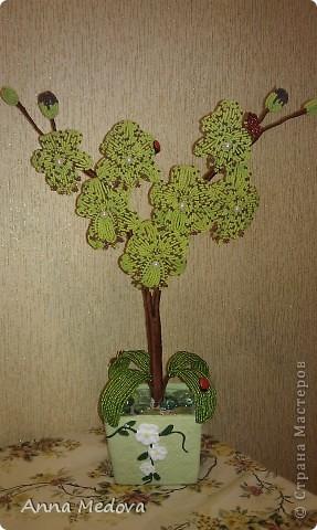 Новая орхидейка! фото 1