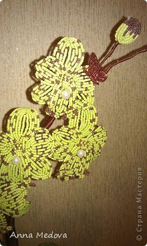 Новая орхидейка! фото 2