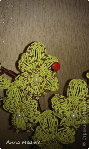 Новая орхидейка! фото 3