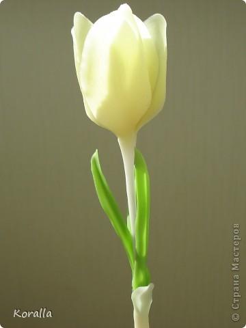 Добрый день, Страна и Мастерицы!!! Решила показать вам крокусы, которые были слеплены еще весной, но все не находилось времени посадить их в горшочек. А причина в том, что они получились неудачными. Зато преобретен бесценный опыт :) Впервые столкнулась с тем, что качество клея влияет на форму лепестков в процессе сушки. Эти цветочки слеплены и самоварного фарфора двух видов клея, подешевле и с пластификатором, а желтые из покупного. Разница очевидна! Чем некачественнее клей, тем веселее девки пляшут :) Слепив цветок, предварительно подсушив лепестки в ложках и повесив сушиться вниз головками, через пару часов наблюдала вот такую картину :) Высыхали кто куда :) Зато такие свойства фарфора можно использовать в цветах, где произвольное и непредсказуемое искривление лепестков даже приветствуется :) В общем, рука не поднялась выбросить, пусть живут... В следующий раз учту ошибки :) фото 7