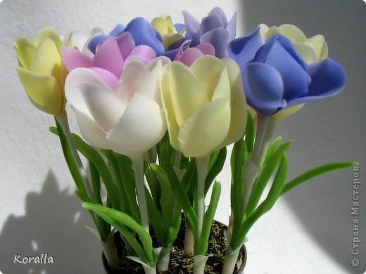 Добрый день, Страна и Мастерицы!!! Решила показать вам крокусы, которые были слеплены еще весной, но все не находилось времени посадить их в горшочек. А причина в том, что они получились неудачными. Зато преобретен бесценный опыт :) Впервые столкнулась с тем, что качество клея влияет на форму лепестков в процессе сушки. Эти цветочки слеплены и самоварного фарфора двух видов клея, подешевле и с пластификатором, а желтые из покупного. Разница очевидна! Чем некачественнее клей, тем веселее девки пляшут :) Слепив цветок, предварительно подсушив лепестки в ложках и повесив сушиться вниз головками, через пару часов наблюдала вот такую картину :) Высыхали кто куда :) Зато такие свойства фарфора можно использовать в цветах, где произвольное и непредсказуемое искривление лепестков даже приветствуется :) В общем, рука не поднялась выбросить, пусть живут... В следующий раз учту ошибки :) фото 1