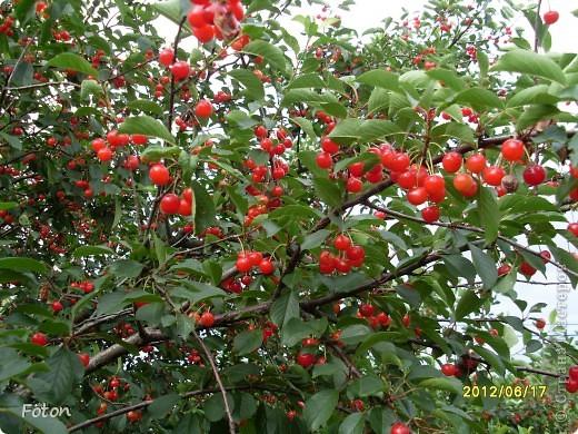 Вот оно какое наше лето . Щедрое ягодное, поспела первая вишня, вкуснаяяяя! фото 1