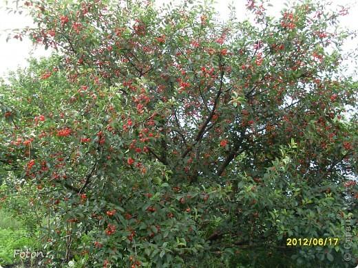 Вот оно какое наше лето . Щедрое ягодное, поспела первая вишня, вкуснаяяяя! фото 2