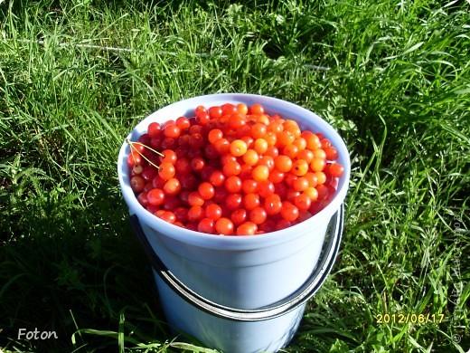 Вот оно какое наше лето . Щедрое ягодное, поспела первая вишня, вкуснаяяяя! фото 3
