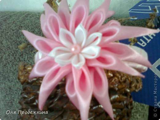 Любимые цветочки! фото 3