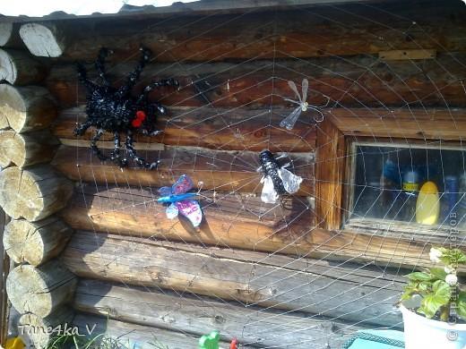 Вот они и появились)))) насекомые запутавшиеся в паутине... фото 5