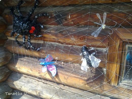 Вот они и появились)))) насекомые запутавшиеся в паутине... фото 1