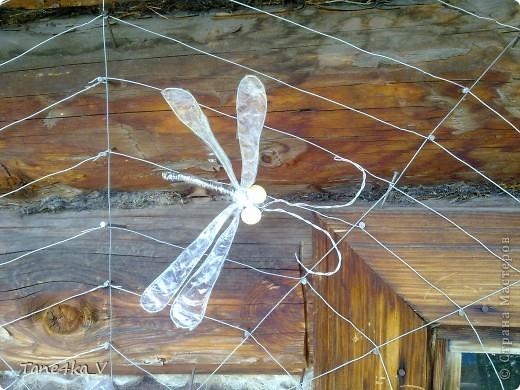 Вот они и появились)))) насекомые запутавшиеся в паутине... фото 2