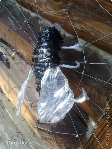 Вот они и появились)))) насекомые запутавшиеся в паутине... фото 3