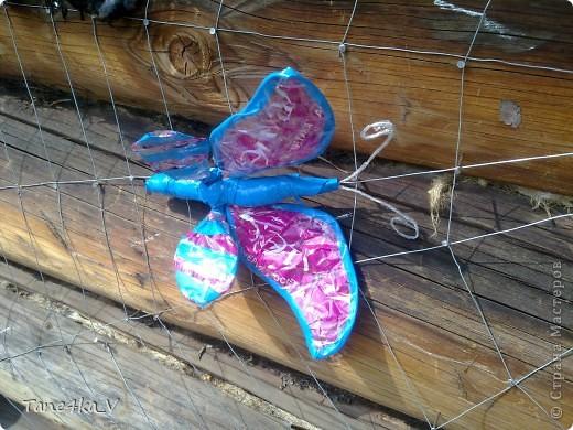 Вот они и появились)))) насекомые запутавшиеся в паутине... фото 4