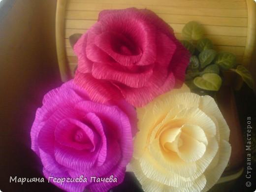 цветя фото 14