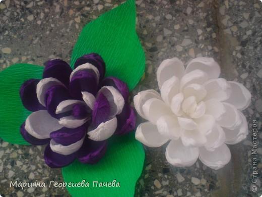 цветя фото 4