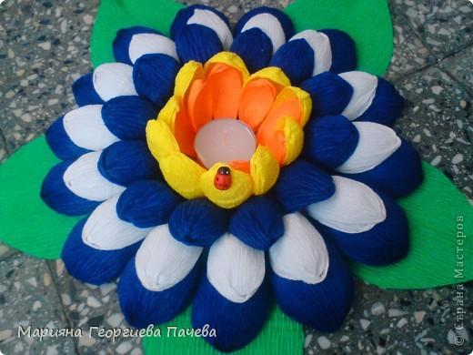 цветя фото 6