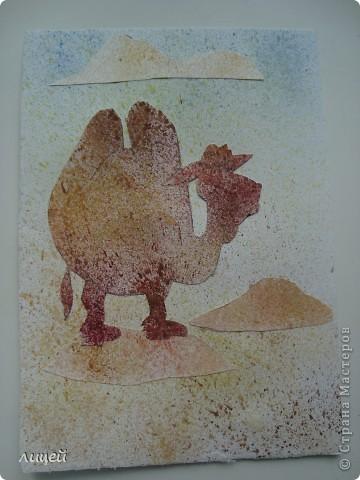 Верблюд в пустыне фото 8