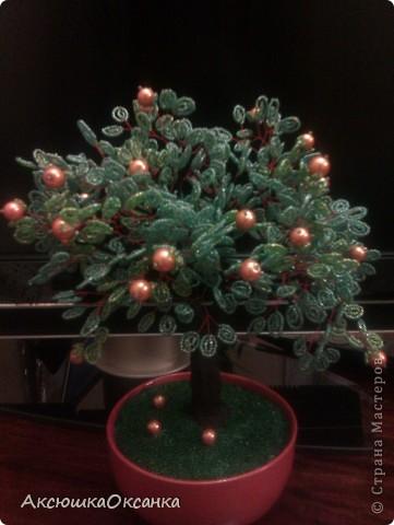 """""""Апельсиновое дерево"""" фото 1"""