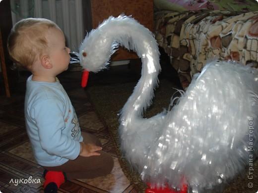 Никита рассматривает лебедя. фото 1