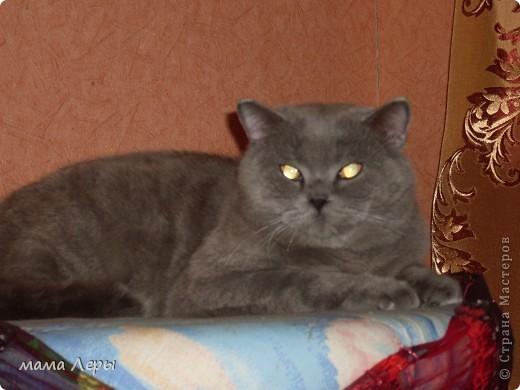 Здравствуйте хочу рассказать историю из моей жизни . Это мой любимчик кот Арамис ,а по-домашнему АРИША.  фото 3