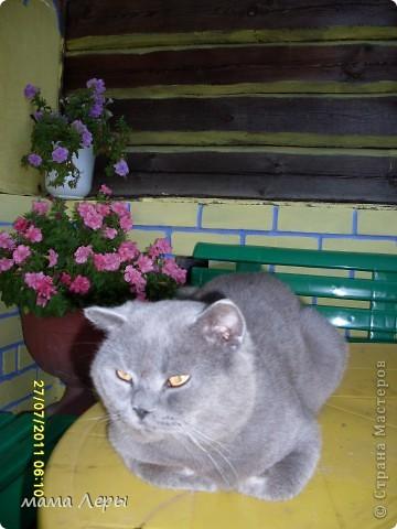 Здравствуйте хочу рассказать историю из моей жизни . Это мой любимчик кот Арамис ,а по-домашнему АРИША.  фото 4