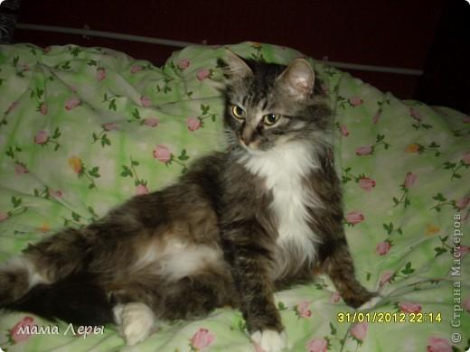 Здравствуйте хочу рассказать историю из моей жизни . Это мой любимчик кот Арамис ,а по-домашнему АРИША.  фото 5