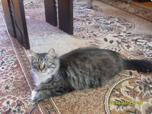 Здравствуйте хочу рассказать историю из моей жизни . Это мой любимчик кот Арамис ,а по-домашнему АРИША.  фото 6