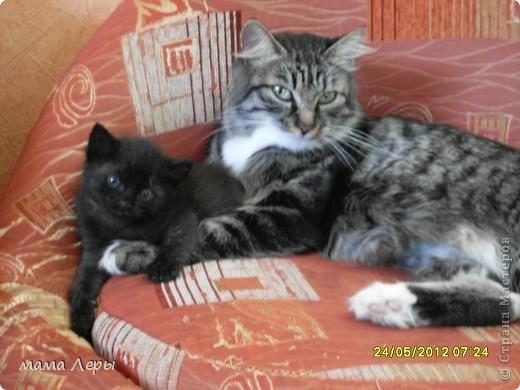 Здравствуйте хочу рассказать историю из моей жизни . Это мой любимчик кот Арамис ,а по-домашнему АРИША.  фото 8