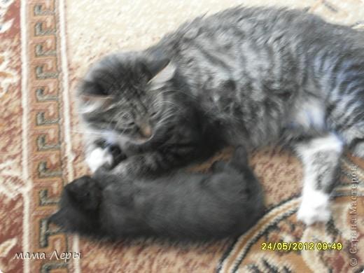 Здравствуйте хочу рассказать историю из моей жизни . Это мой любимчик кот Арамис ,а по-домашнему АРИША.  фото 9