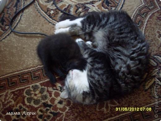 Здравствуйте хочу рассказать историю из моей жизни . Это мой любимчик кот Арамис ,а по-домашнему АРИША.  фото 10