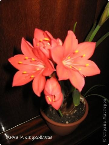 ..а еще цветочки.. фото 4