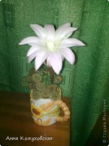 ..а еще цветочки.. фото 1