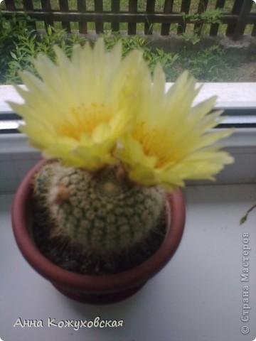 ..а еще цветочки.. фото 2