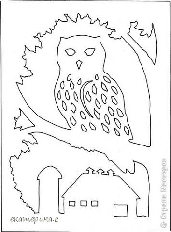 сова на дереве фото 3
