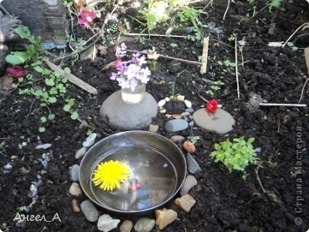 мой мини- сад фото 1