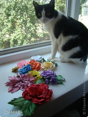 Это моя дорогая кото модель Фанни! И мои первые пробы в ленточных цветах. я пока только учусь, и в работах много недочетов, так что не судите строго фото 1