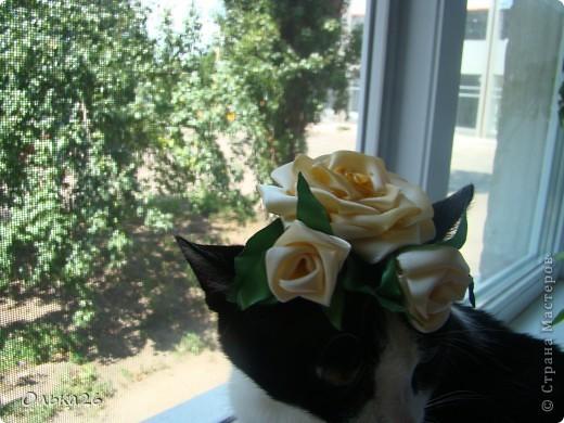 Это моя дорогая кото модель Фанни! И мои первые пробы в ленточных цветах. я пока только учусь, и в работах много недочетов, так что не судите строго фото 2