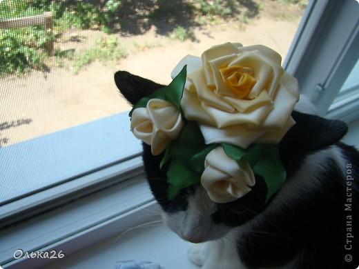 Это моя дорогая кото модель Фанни! И мои первые пробы в ленточных цветах. я пока только учусь, и в работах много недочетов, так что не судите строго фото 3