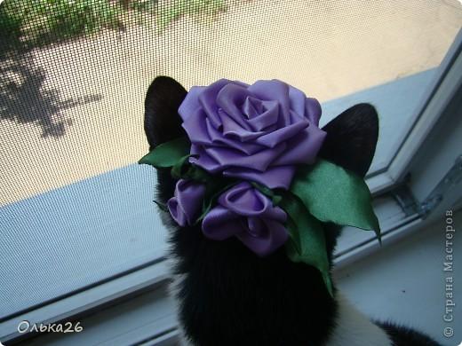 Это моя дорогая кото модель Фанни! И мои первые пробы в ленточных цветах. я пока только учусь, и в работах много недочетов, так что не судите строго фото 4