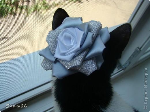 Это моя дорогая кото модель Фанни! И мои первые пробы в ленточных цветах. я пока только учусь, и в работах много недочетов, так что не судите строго фото 5