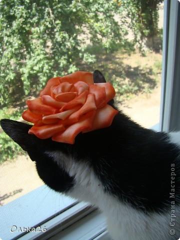 Это моя дорогая кото модель Фанни! И мои первые пробы в ленточных цветах. я пока только учусь, и в работах много недочетов, так что не судите строго фото 6